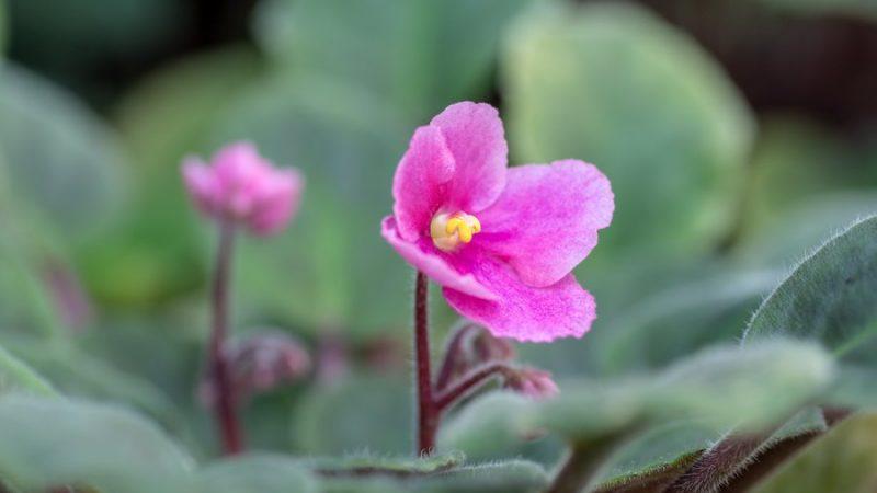 A növényárusítás új rendje az ELTE Füvészkertben