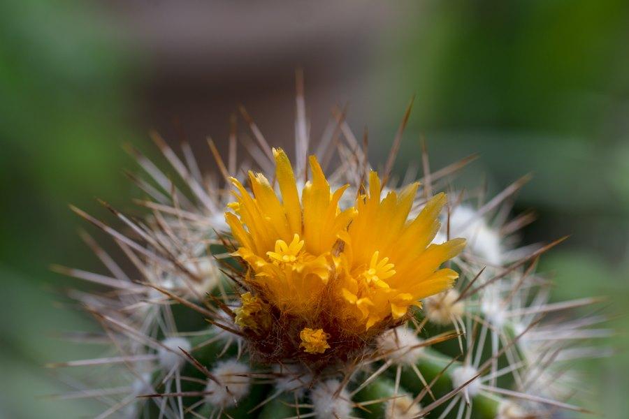 Kaktuszok és egyéb pozsgások workshop júl. 5-én 13 órától