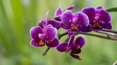 Orchidea gyűjtemény bemutatása