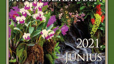 Orchidea és Bromélia Kiállítás a Füvészkertben