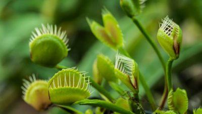Vezetett séta a rovarfogó növénygyűjteményben
